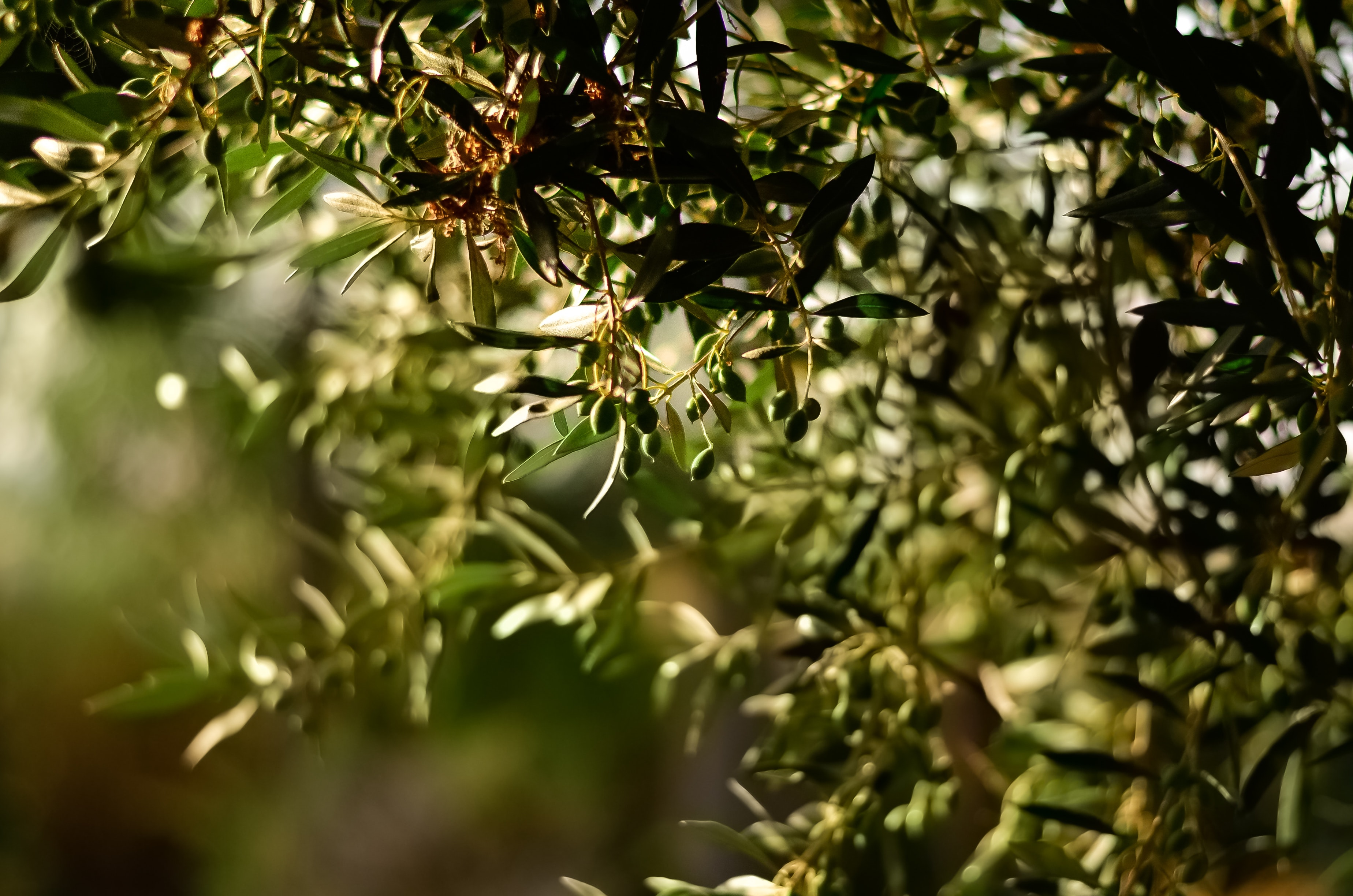 blur-branches-close-up-1047312